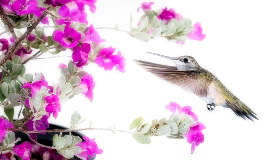 Hummingbird Photo Copyright Scott Bourne