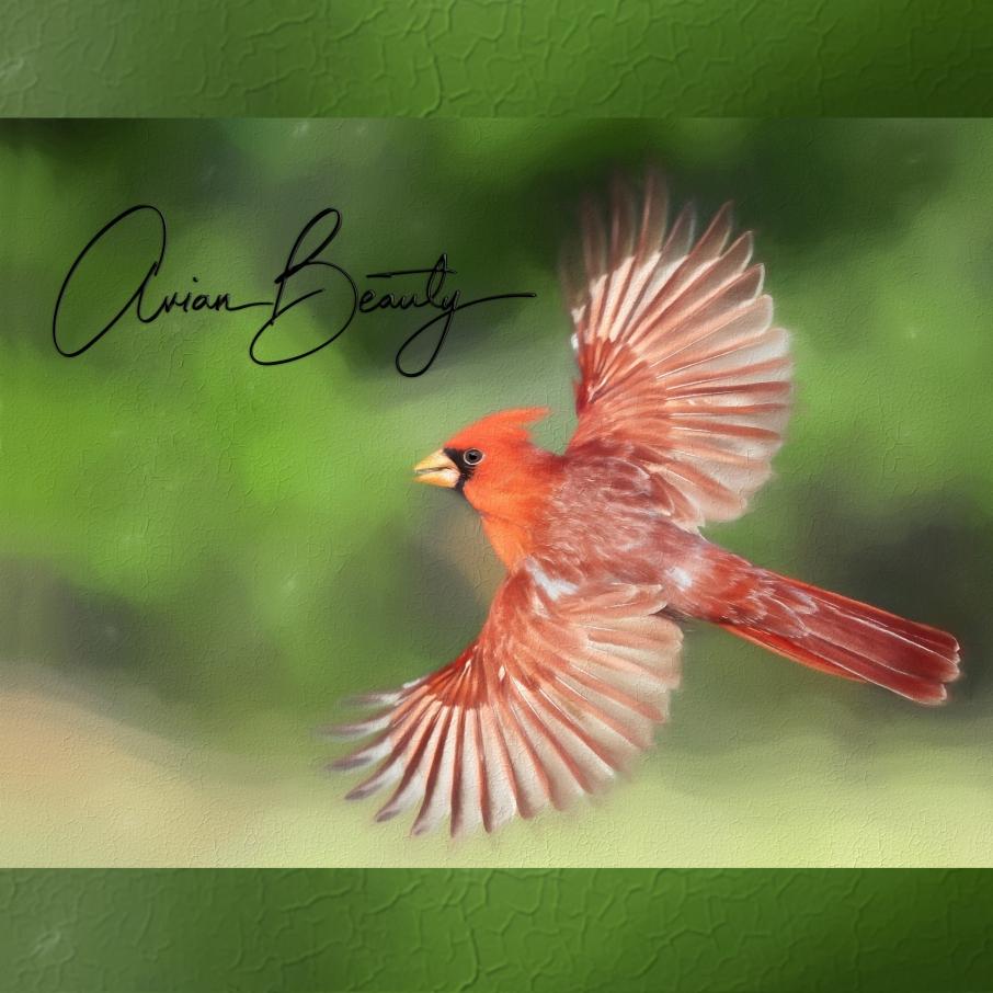 avianbeautypodcastart