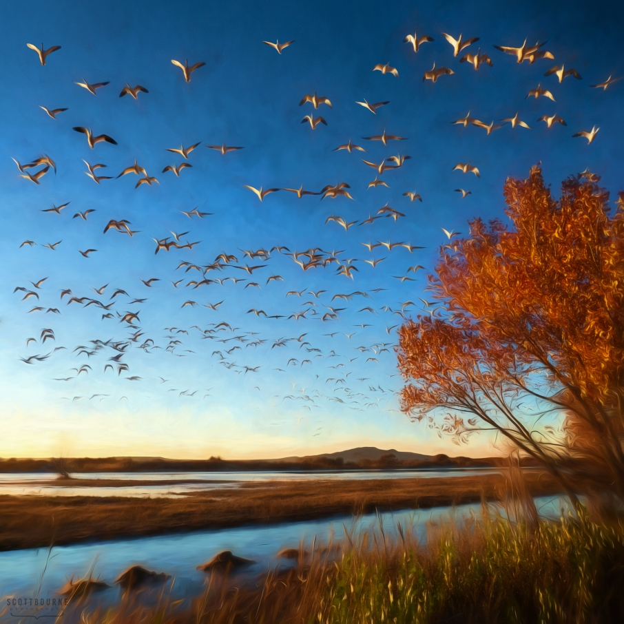 Photo at Bosque del Apache by Scott Bourne
