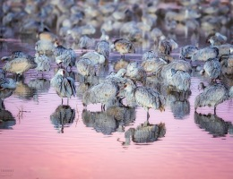 Bosque del Apache Photo by Scott Bourne