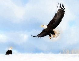 Bald Eagle In Flight Photo by Scott Bourne