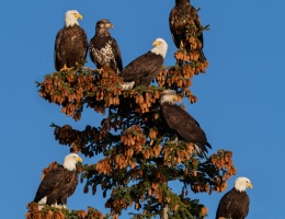 Convocation of Eagles
