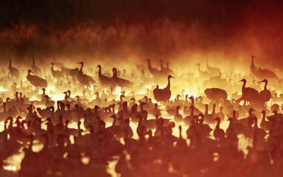 Cranes in the Fire Mist sans Flight photo by Scott Bourne